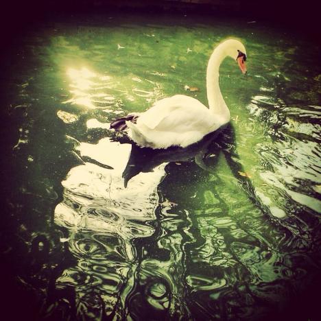 espejo-el-cisne-parquemarialuisa-sevilla-2014