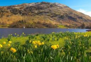 Lake District con daffodils