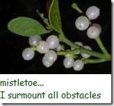 mistletoe_i surmount all obstacles