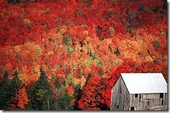 fall_foliage_nh1