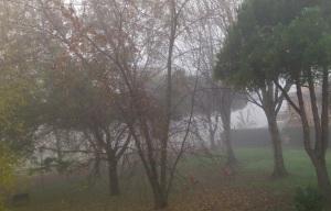 nebbia a Selvazzano_dic2013