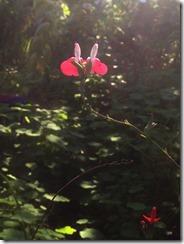 piccole orchidee