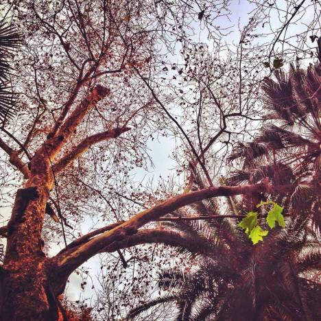 Arboles y hojas de invierno. Perspectiva1. parquemarialuisa sevilla diciembre